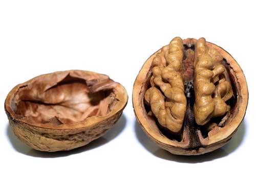 Ernährung & Gehirnleistungsfähigkeit